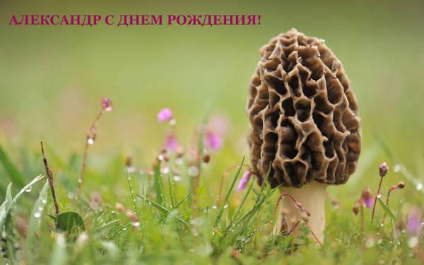 http://sd.uploads.ru/t/Q9F34.jpg