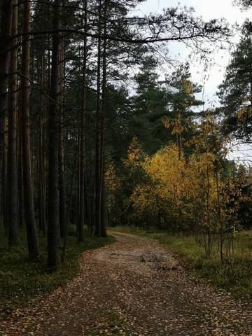 http://sd.uploads.ru/t/RFvgI.jpg