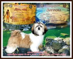 http://sd.uploads.ru/t/SbqWo.jpg