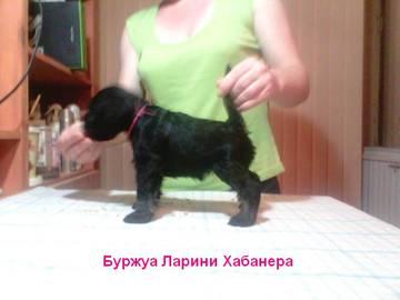 http://sd.uploads.ru/t/ULpXI.jpg