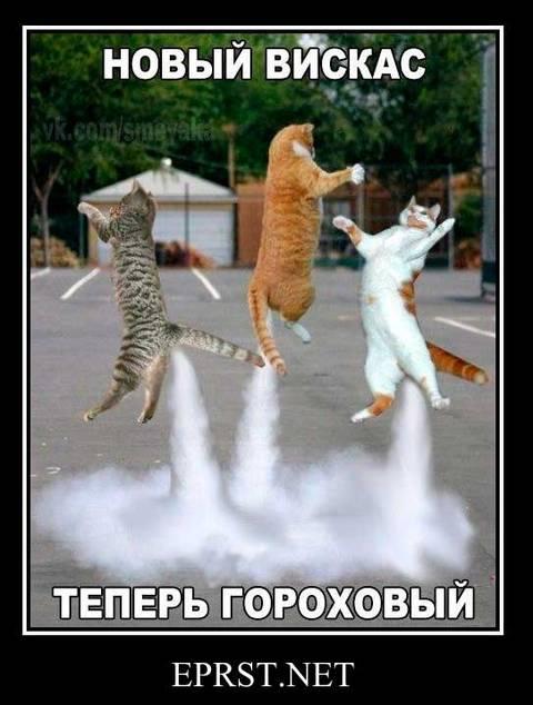 http://sd.uploads.ru/t/Vwo2h.jpg