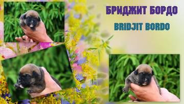 http://sd.uploads.ru/t/WD8Yi.jpg