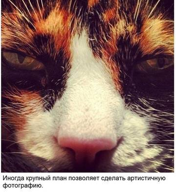 http://sd.uploads.ru/t/Wi6QP.jpg