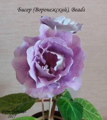 http://sd.uploads.ru/t/Wpm4n.jpg