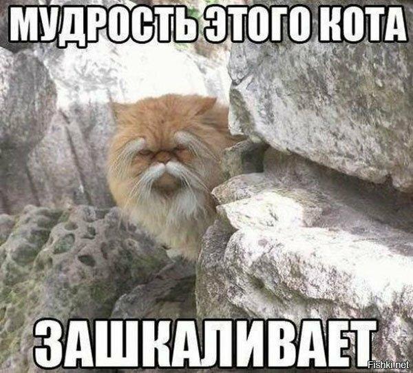 http://sd.uploads.ru/t/Z0L3i.jpg