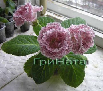 http://sd.uploads.ru/t/ZqAn7.jpg