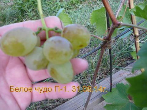 http://sd.uploads.ru/t/cKPNI.jpg