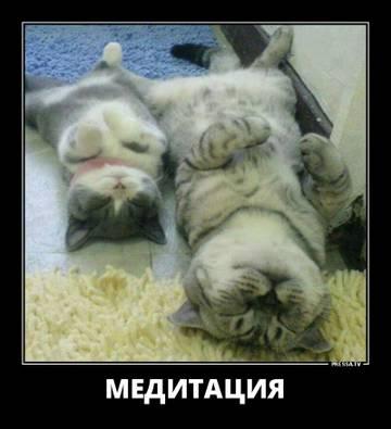 http://sd.uploads.ru/t/cMXkx.jpg