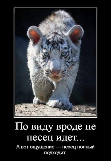 http://sd.uploads.ru/t/cfH0G.png