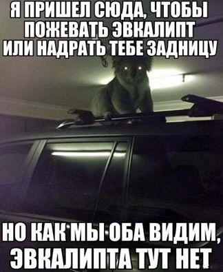 http://sd.uploads.ru/t/d8o0l.jpg