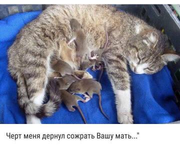 http://sd.uploads.ru/t/dKhD7.jpg