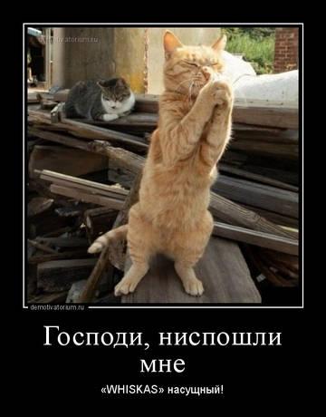 http://sd.uploads.ru/t/dNlmP.jpg