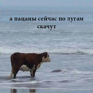 http://sd.uploads.ru/t/e8NSV.png