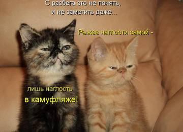 http://sd.uploads.ru/t/eVONY.jpg