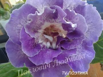 http://sd.uploads.ru/t/iyxTY.jpg