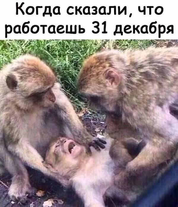 http://sd.uploads.ru/t/jVRsx.jpg