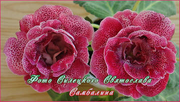 http://sd.uploads.ru/t/jf8g9.jpg