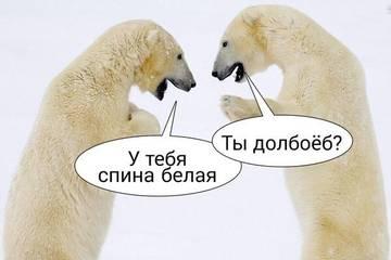 http://sd.uploads.ru/t/k7bjf.jpg