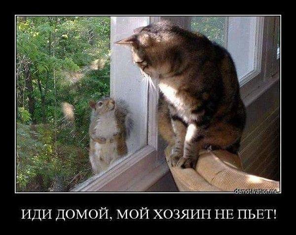 http://sd.uploads.ru/t/kCJe9.jpg