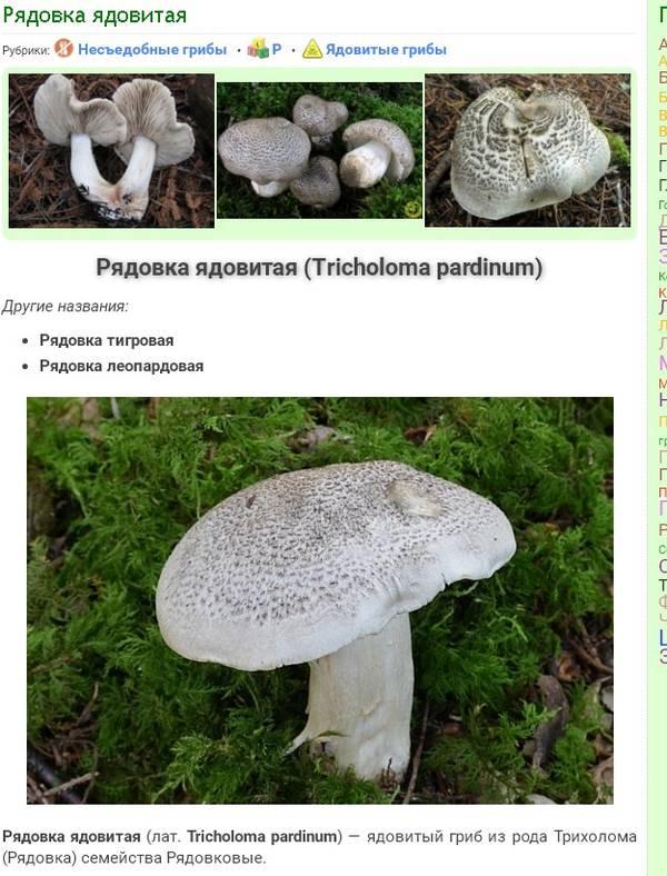 http://sd.uploads.ru/t/lEOub.jpg