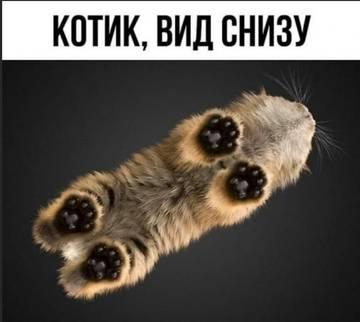 http://sd.uploads.ru/t/nNMPs.jpg