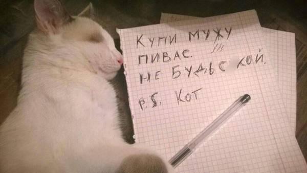 http://sd.uploads.ru/t/nrmBG.jpg