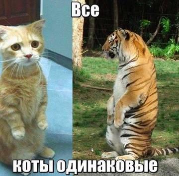 http://sd.uploads.ru/t/oBEM3.jpg