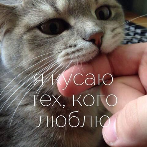 http://sd.uploads.ru/t/oXKNZ.jpg