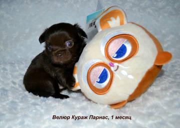 http://sd.uploads.ru/t/ofnO9.jpg