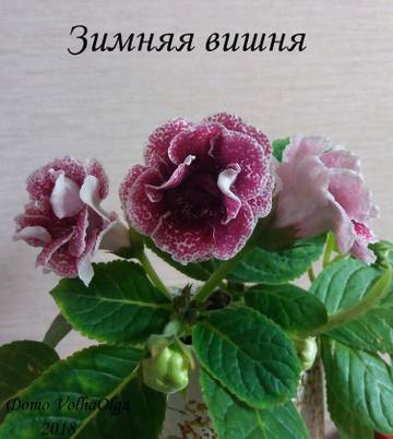 http://sd.uploads.ru/t/opj4i.jpg