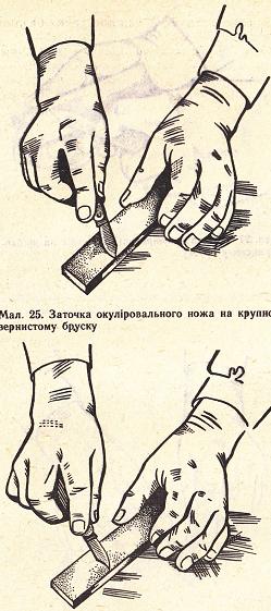http://sd.uploads.ru/t/otmAN.png