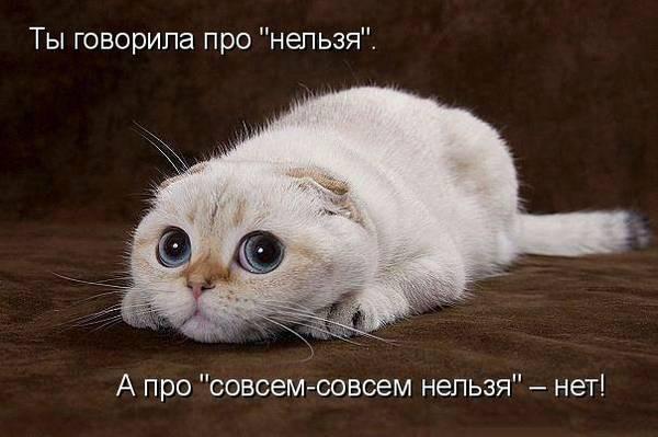 http://sd.uploads.ru/t/pGtAc.jpg
