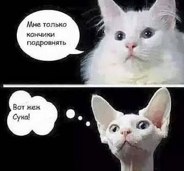 http://sd.uploads.ru/t/pzcVt.jpg