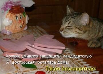 http://sd.uploads.ru/t/qYK0A.jpg