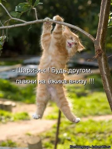 http://sd.uploads.ru/t/r9PS2.jpg