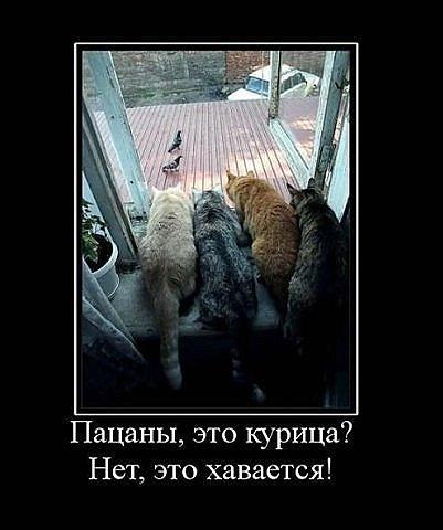 http://sd.uploads.ru/t/rJTsu.jpg