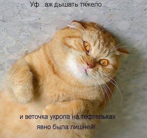 http://sd.uploads.ru/t/rTIJk.jpg
