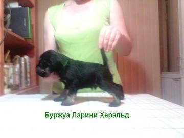 http://sd.uploads.ru/t/sna8u.jpg