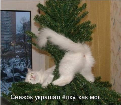 http://sd.uploads.ru/t/tJ5ku.jpg