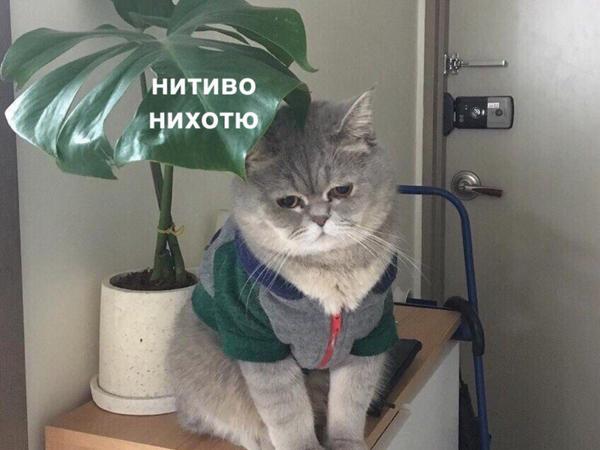 http://sd.uploads.ru/t/tZScj.png