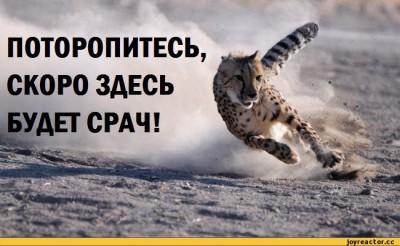 http://sd.uploads.ru/t/tiu5a.jpg