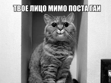 http://sd.uploads.ru/t/uCDiM.jpg