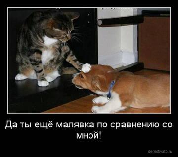 http://sd.uploads.ru/t/uTLcM.jpg