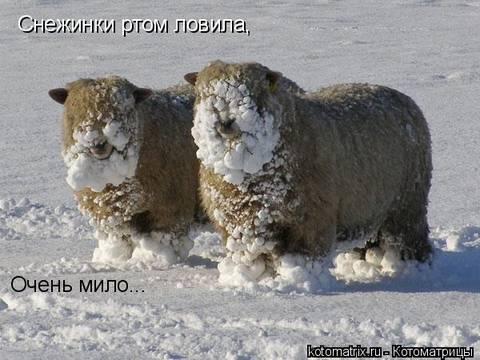 http://sd.uploads.ru/t/uUMEn.jpg