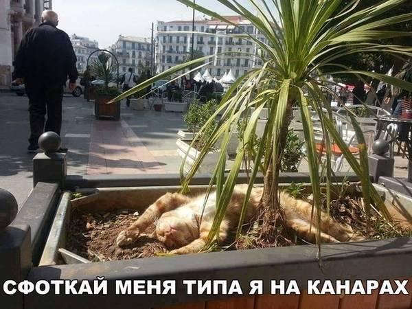 http://sd.uploads.ru/t/us5an.jpg