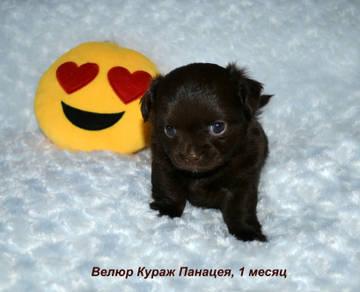 http://sd.uploads.ru/t/v6jJG.jpg