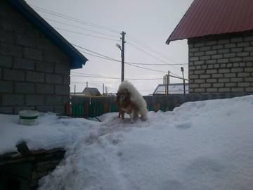 http://sd.uploads.ru/t/vQ140.jpg