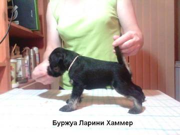 http://sd.uploads.ru/t/vwFUi.jpg