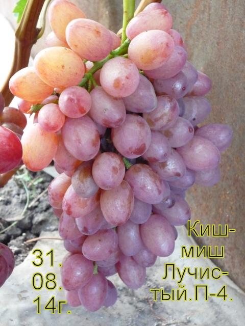 http://sd.uploads.ru/t/vyAqP.jpg