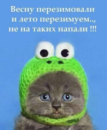 http://sd.uploads.ru/t/xs0RZ.jpg
